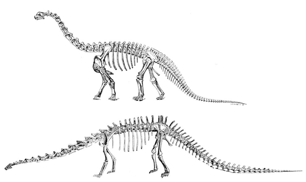 camarasaurus diplodocus