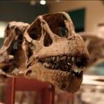 Az óriás növényevő dinoszauruszok meglepően gyorsan növesztettek új fogakat