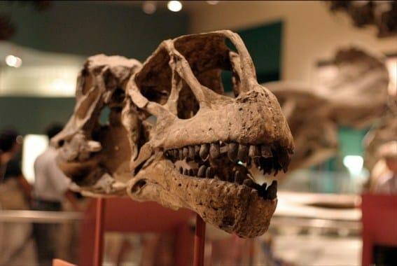 camarasaurus fogazat
