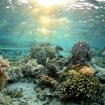 A tengeri hínáron élő baktériumok segíthetnek a fogszuvasodás megelőzésében