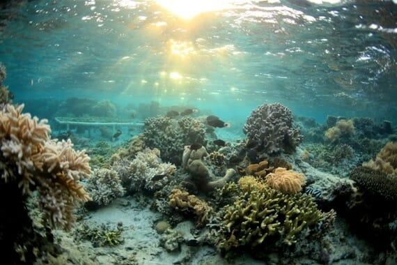 tengeri hinar fogszuvasodas