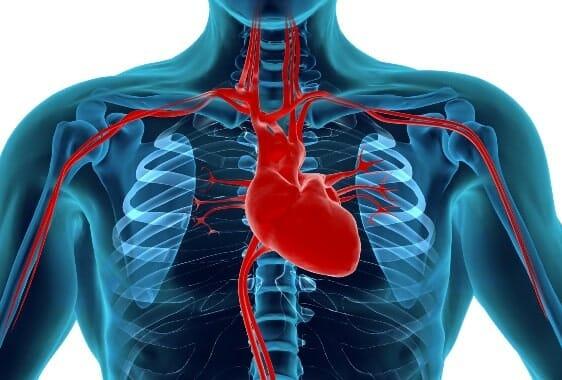 Az ínygyulladást okozó baktériumok a véráramba kerülve elősegítik a szívbetegségek kialakulását. /Kép: hishealthnews.com/