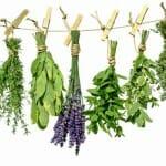 Gyógynövények és homeopátiás szerek a szorongás enyhítésére
