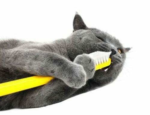 8 jel, hogy itt az ideje lecserélni a fogkefédet