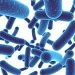 A probiotikumok meggátolhatják a fogszuvasodást?