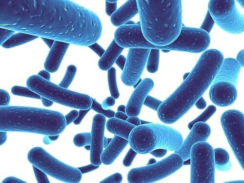 probiotikum-fogszuvasodas