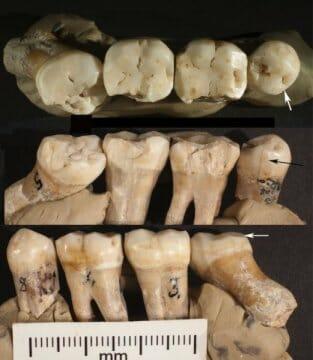 neandervolgyi-lelet